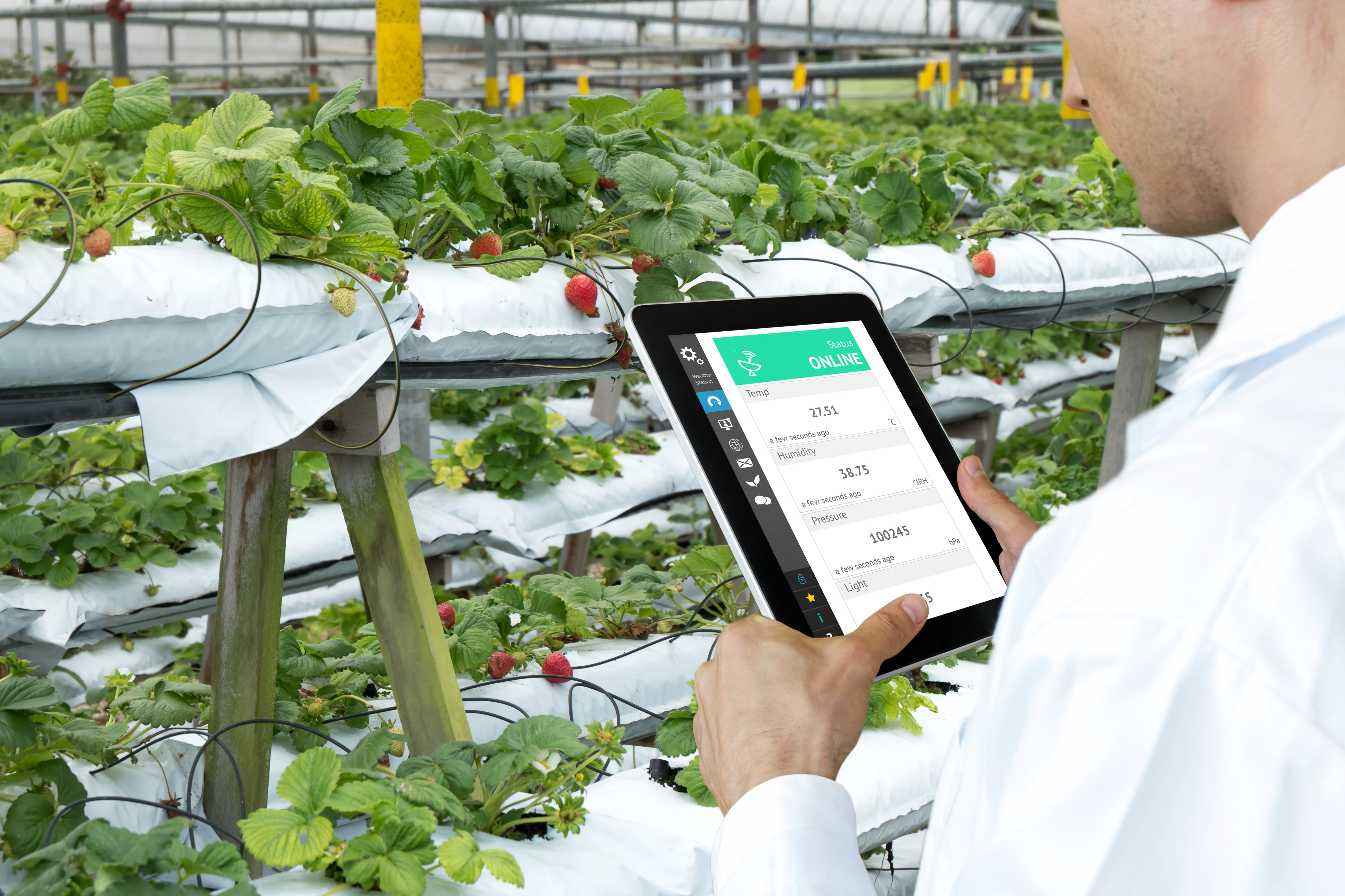 food-vegetables-technology