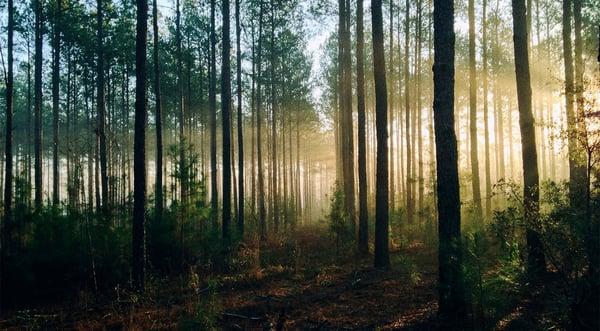 Tips till dig i skogsbranschen som ska välja affärssystem