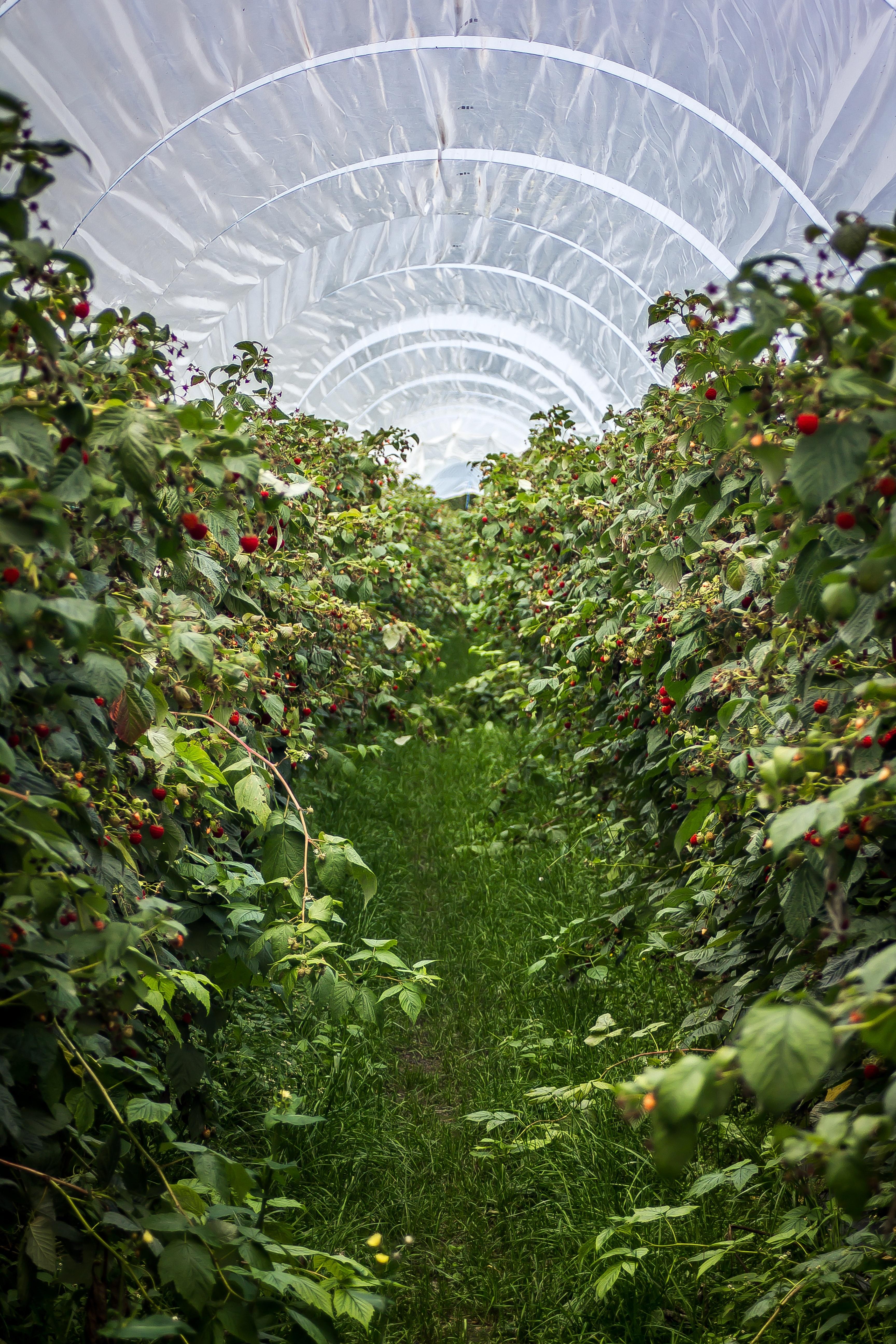 Digital transformation in fresh produce